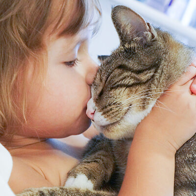 Cute Ways To Spoil Your Cat On Love Your Pet Day
